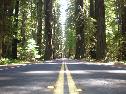 Road in Redwoods