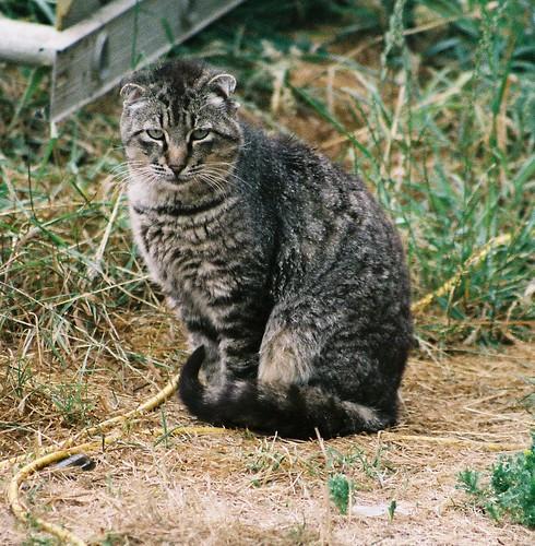 Tough-Looking Punk Tom Cat