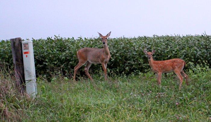 09-16-deer
