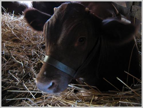 farm 7