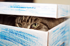 Schrdinger's cat (Sam-Cat) Tags: blue eye cat canon fur 50mm eyes dof box pussy crayon f18 18 schrodinger nifty schrdinger 50mmf18 schrodingerscat niftyfifty schrdingerscat schrodingercat