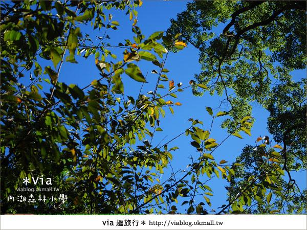 【溪頭一日遊】森林中的夢幻校園~內湖森林小學34