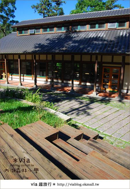 【溪頭一日遊】森林中的夢幻校園~內湖森林小學14