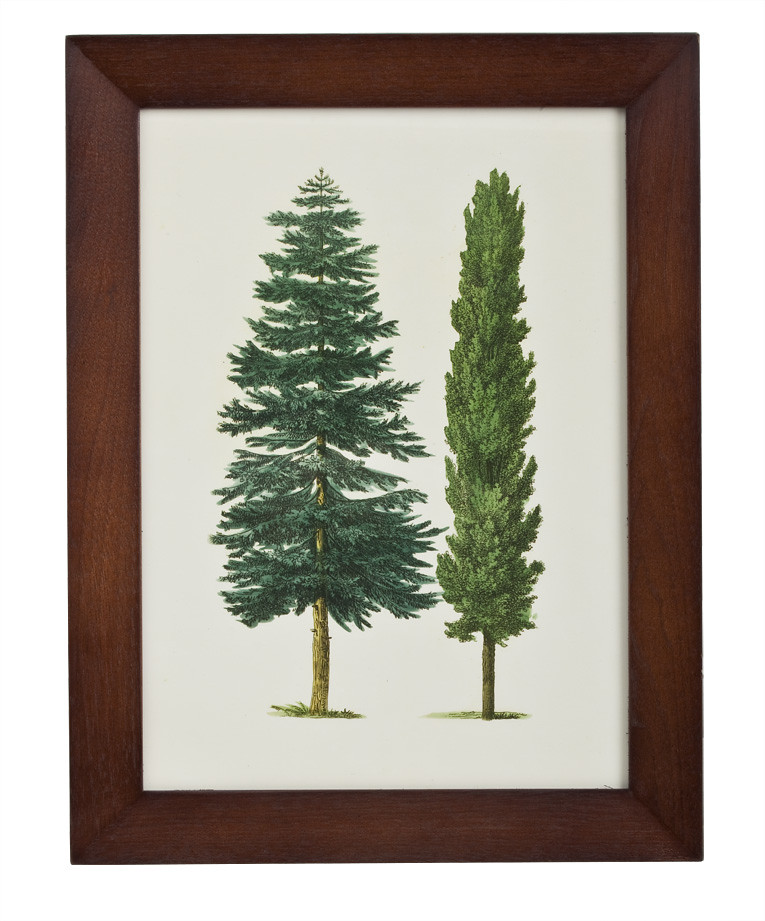 John Derian for Target Wall Decor in Evergreen Tree