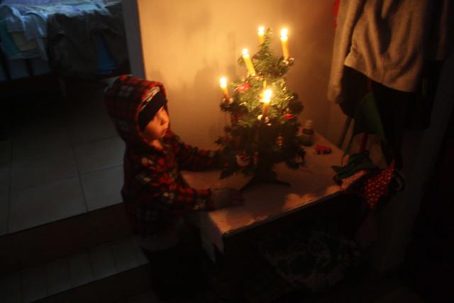 ... Moritz einziger Geburtstagswunsch war, ein Christbaum : )