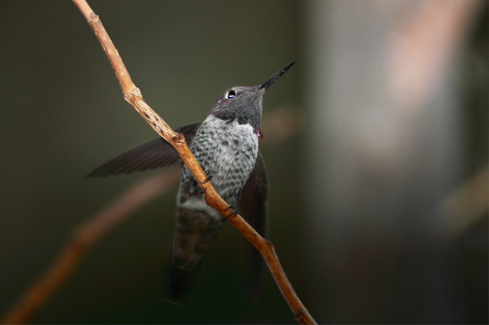 091610_hummingbird