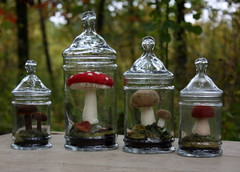 mother nature's apothecary (lilfishstudios) Tags: felted mushrooms fungus needlefelting scenes terrarium toadstools apothecaryjars