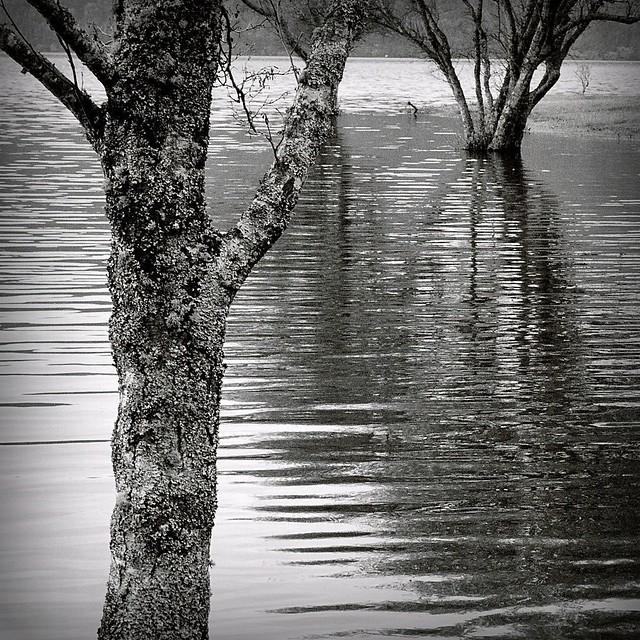 Lagoon Day (2) #47790002