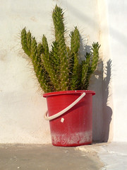 A Present (Nicote) Tags: old cactus island greek stitch time decay sting greece gift present stick sifnos kastro