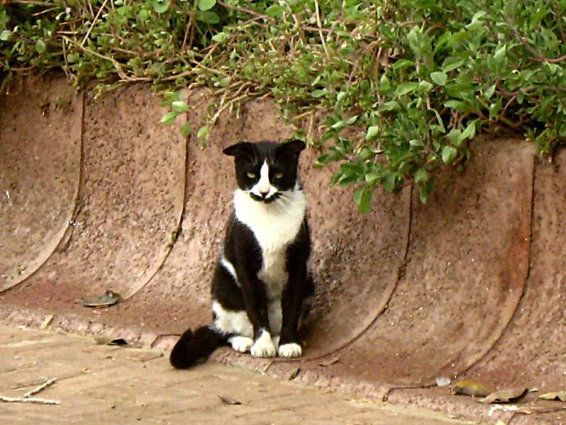 25-09-2010-cat