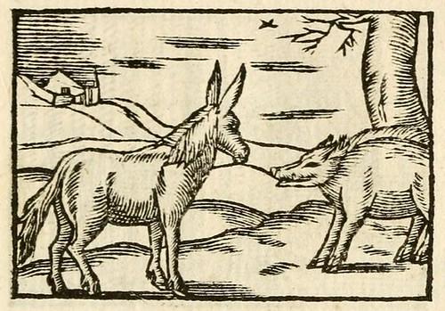 Aper et Asinus