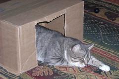 BuckleyBox