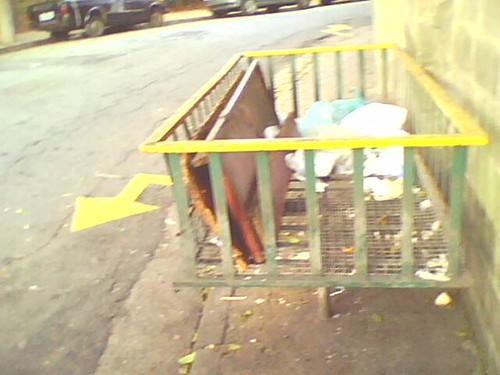 Lixo ou pedestre?