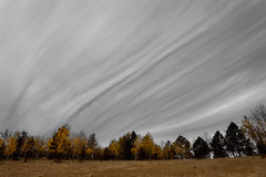 Striated Phantom (Fort Photo) Tags: autumn trees tree fall nature clouds forest landscape nikon colorado co minimalism aspen cloudscape teller 2010 striated wavey striations d700