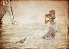 Hey you, take me a shot! (Claudio_Firenze) Tags: texture vintage photographer pigeon fiatlux flickraward mygearandmepremium mygearandmebronze mygearandmesilver