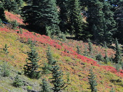 Fall colors coming down Shriner Peak trail.