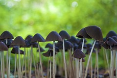 they're everywhere (Wim Koopman) Tags: green nature mushroom garden photography photo nikon bokeh stock nederland paddestoel stockphoto stockphotography d90 goudriaan wpk