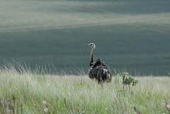 Fotografado no Parque Nacional da Serra da Canastra - Sacramento MG -  Brasil