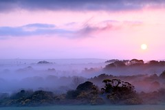 Valley in the Mist (Tony Armstrong-Sly) Tags: morning trees sky sun mist nature misty clouds sunrise landscape dawn mywinners