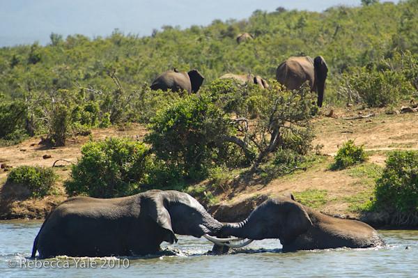 RYALE_SA_National_Park_Addo_70