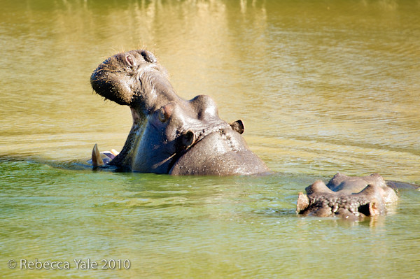 RYALE_Schotia_Safaris_8