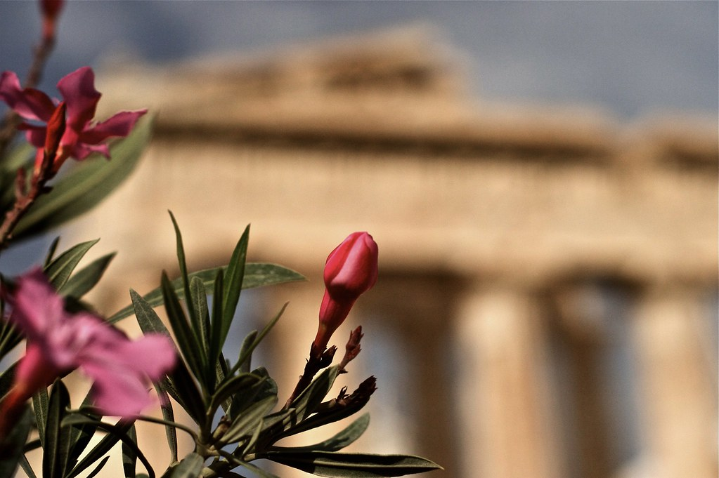 A FLOWER OF THE GODS ...... THE ACROPOLIS ATHENS
