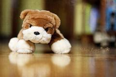 Puppy (280/365) (Rebe {ha