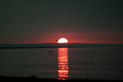 IMG_5235 (Freems88) Tags: sunset beach lakeontario portdalhousie