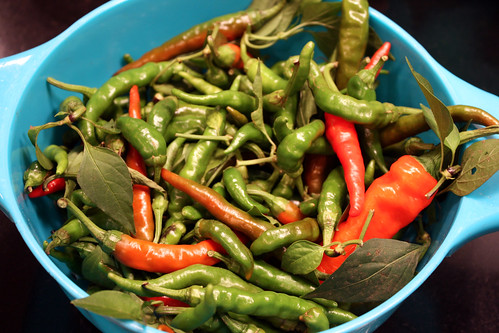 last harvest of chiles
