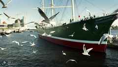 Hamburg Seagulls (Jrg Dickmann) Tags: leica seagulls topf25 birds 35mm river germany topf50 ship harbour gull hamburg rangefinder hh hafen landungsbrcken topf100 mwen nokton elbe voigtlnder rickmerrickmers m9 jrgdickmann