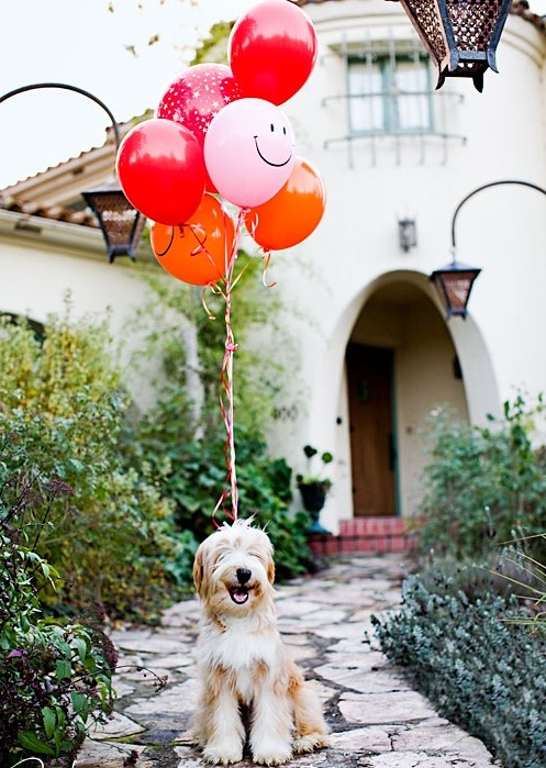 Dog smiling with ballons photographed by Stephanie Rausser