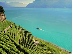 w & w  -  wine and water (mujepa) Tags: blue lake alps alpes switzerland suisse geneva wine lac vine lausanne bleu vineyards vin bateau lman steamer vignes vignoble vevey domaine vaud lavaux bbng