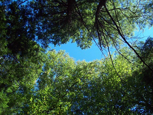 Chestnut Ridge: Sky through trees