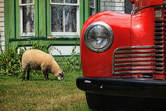Truck, House, Lawn Mower! (sminky_pinky100 (In and Out)) Tags: travel red house heritage tourism truck vintage pretty novascotia sheep scenic memorylane lakecharlotte omot cans2s