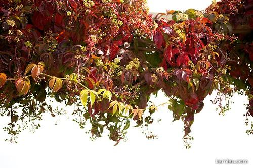 Random Autumn Photos