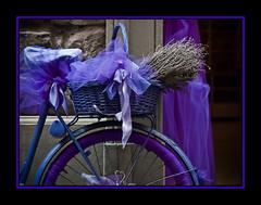 Lavanda y la bici (Kepa_photo) Tags: art bike bicycle raw bicicleta olympus tienda cycle florencia bici zuiko euskalherria euskadi paisvasco 43 ciclo lavanda fourthirds olympuse1 digital43 livemos fsuro1810201024102010 kepaphoto kepaargazkiak