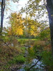Joining (creed_400) Tags: park autumn trees west fall colors creek forest river woods october belmont michigan rogue