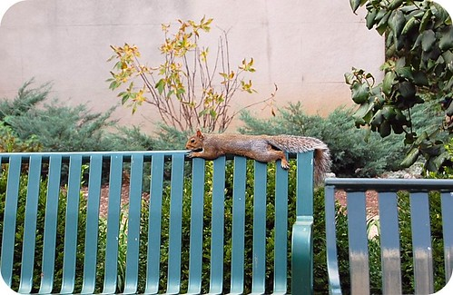 squirrel just chilling