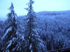Foresta del Latemar (makia2007) Tags: dolomiti sdtirol latemar welschnofen novalevante