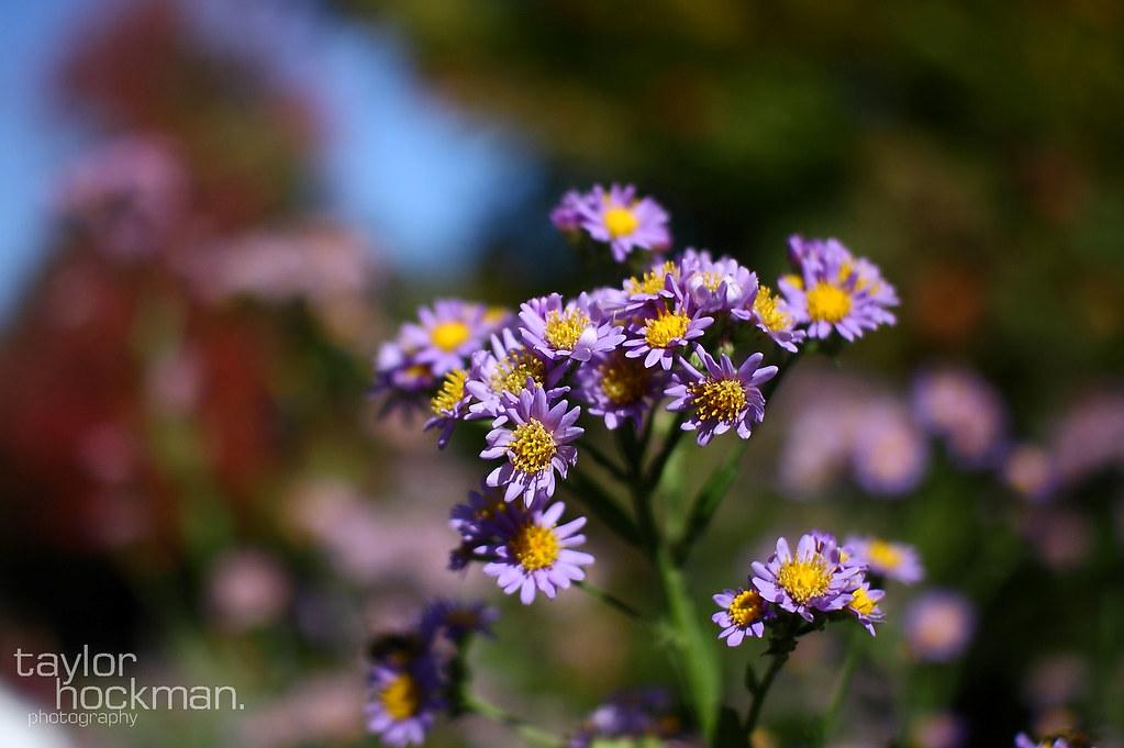 IMAGE: http://farm5.static.flickr.com/4103/5105435677_a44dcca223_b.jpg