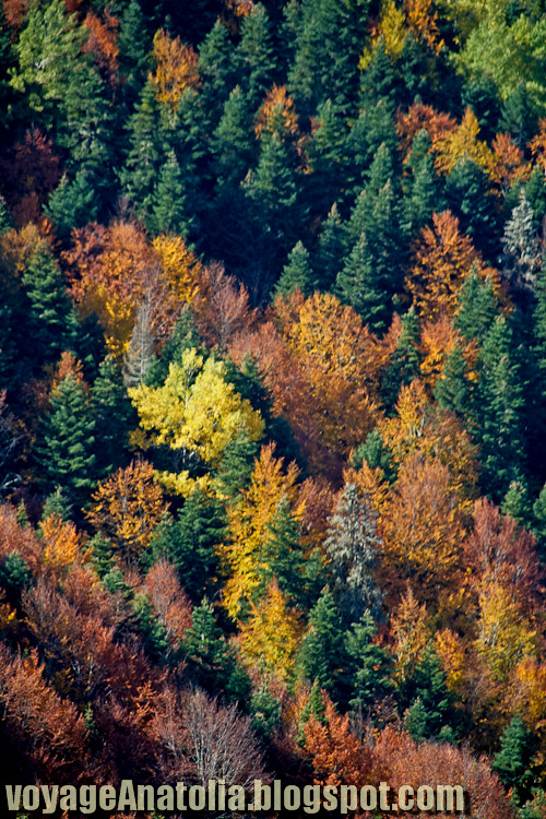 Autumn Forest at Seven Lakes Region, Bolu, Turkey