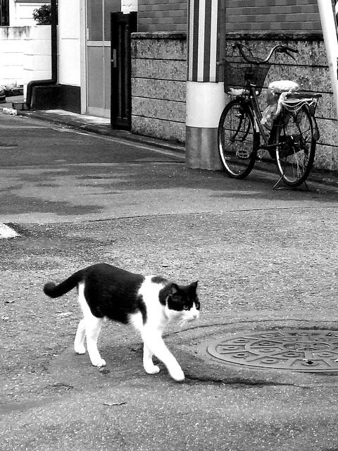 Today's Cat@2010-10-29