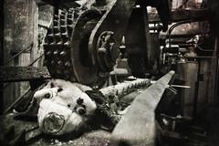 Mais quelle horreur ! (Ysalis.net) Tags: urban dog chien abandoned 35mm decay abandon urbanexploration 5d sawmill 2010 urbex abandonné scierie urbanurbex