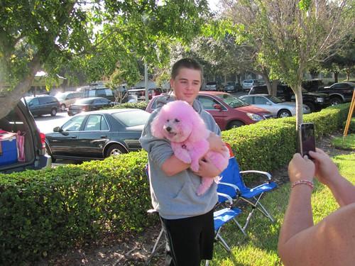 04-pink-poodle