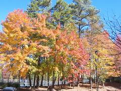 Godbold Park Cary NC