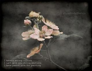 Haiku - Pastel pink