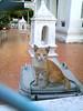 stray cat, 2553 (som300) Tags: stray street temple cat cameraphone motorola zn5