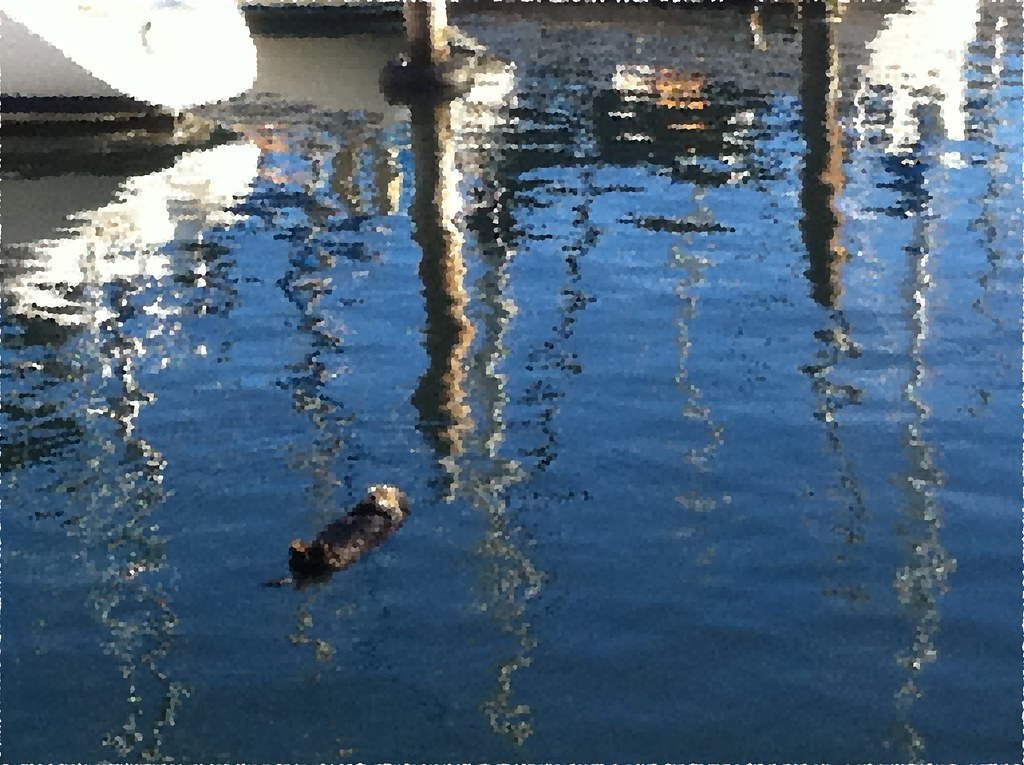 sea otter ripples