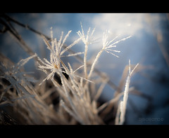 Snow Burst (danjhoros) Tags: winter snow grass alaska 50mm holga nikon bokeh anchorage burst 18 d90