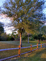 Along the walk way (HappyYoga) Tags: park riverbendpark jupiterflorida